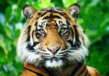 Big Cats Facing Britain S Wild Predators Torrent